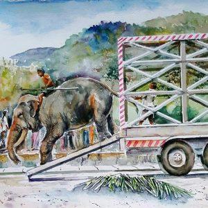 Online, Art, Art Gallery, Online Art Galley, Sri Lanka, Karunagama, Watercolor, Water Colour, Sri lanka tuskers, Sri lanka elephants, Elephants, Tuskers, Landscapes, Kandy, Kandy perahara, Transportation.